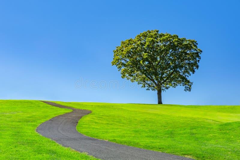 Eenzame boom op een groene weide stock foto's