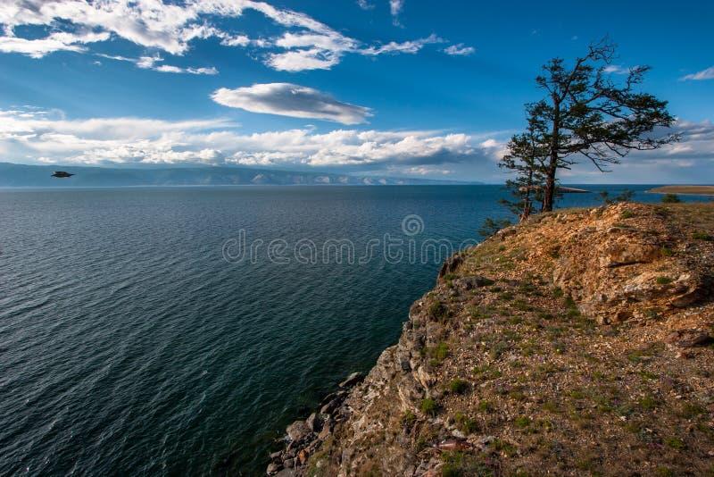 Eenzame boom op een hoge rots op de kust van Meer Baikal stock foto