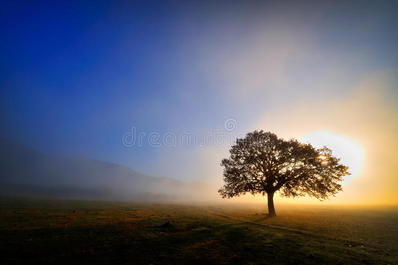 Eenzame boom op gebied stock fotografie