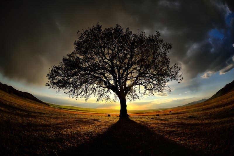 Eenzame boom op gebied bij dageraad royalty-vrije stock foto's