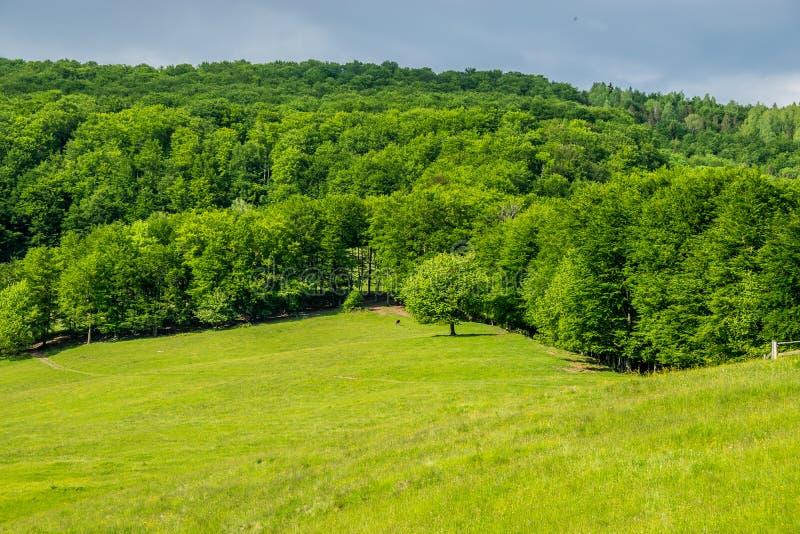 Eenzame boom op gebied en bos stock afbeelding