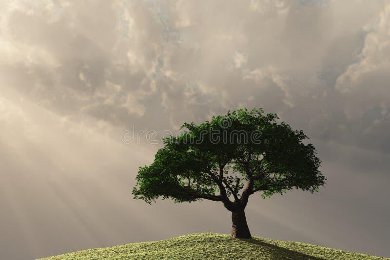 Eenzame boom op helling stock fotografie