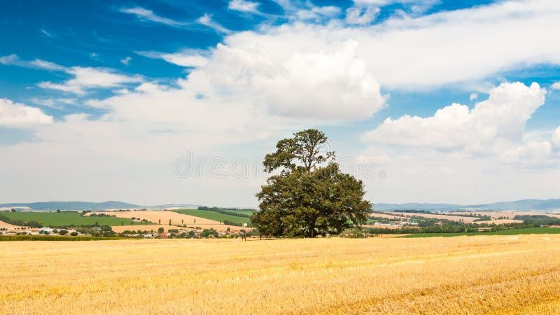 Eenzame boom op het gebied onder blauwe hemel met wolken royalty-vrije stock foto