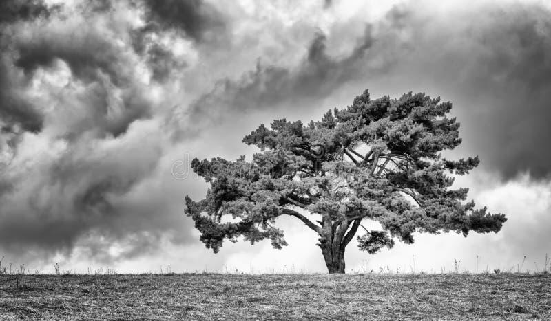 Eenzame boom op horizon royalty-vrije stock foto