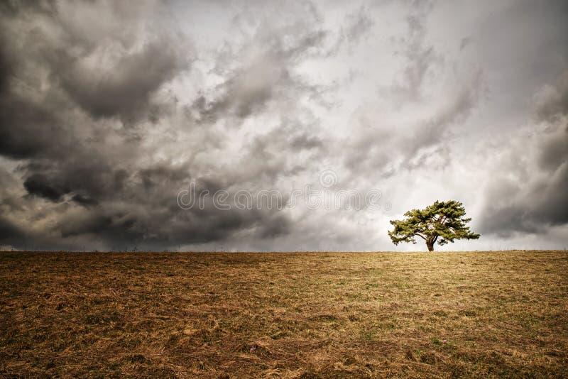 Eenzame boom op horizon stock foto's