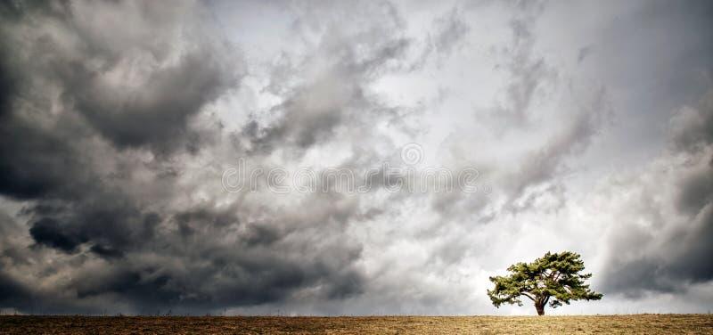 Eenzame boom op horizon stock afbeelding