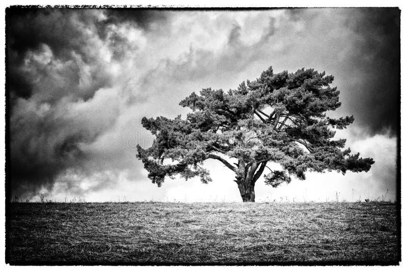 Eenzame boom op horizon stock fotografie