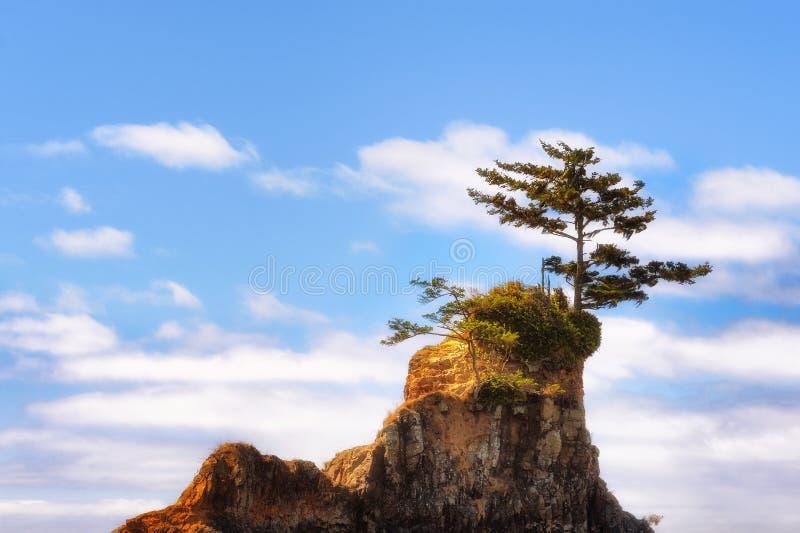 Eenzame boom op intertidal rots in Lincoln City royalty-vrije stock afbeelding