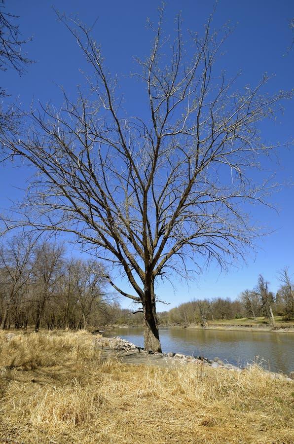 Eenzame boom op rivierbank royalty-vrije stock fotografie