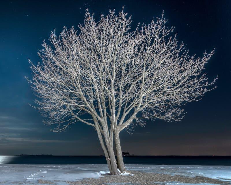Eenzame Boom op Sneeuwstrand bij Nacht stock foto