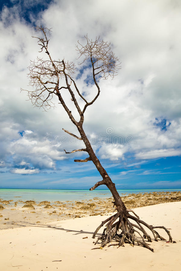 Eenzame Boom op Tropisch Strand stock fotografie