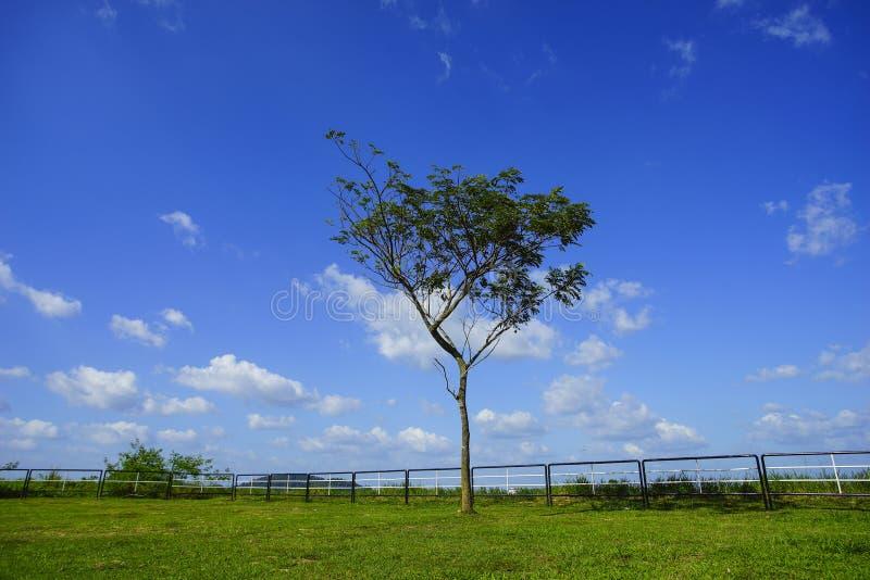 Eenzame boom oude boom, groen gras en mooie blauwe hemel nave stock foto's