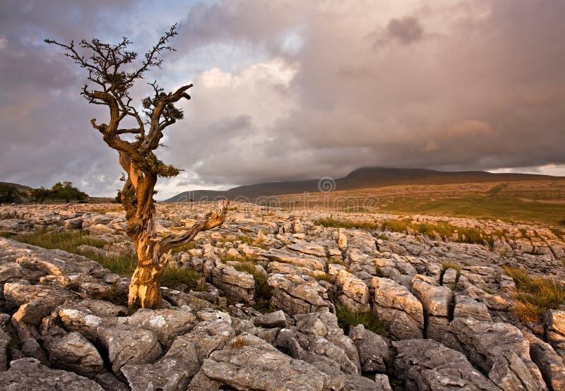 Eenzame boom status stock fotografie