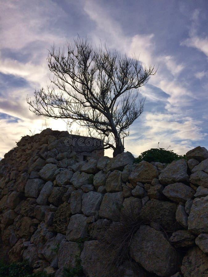 Eenzame Boom, Steenmuur, Humeurige Hemel stock foto