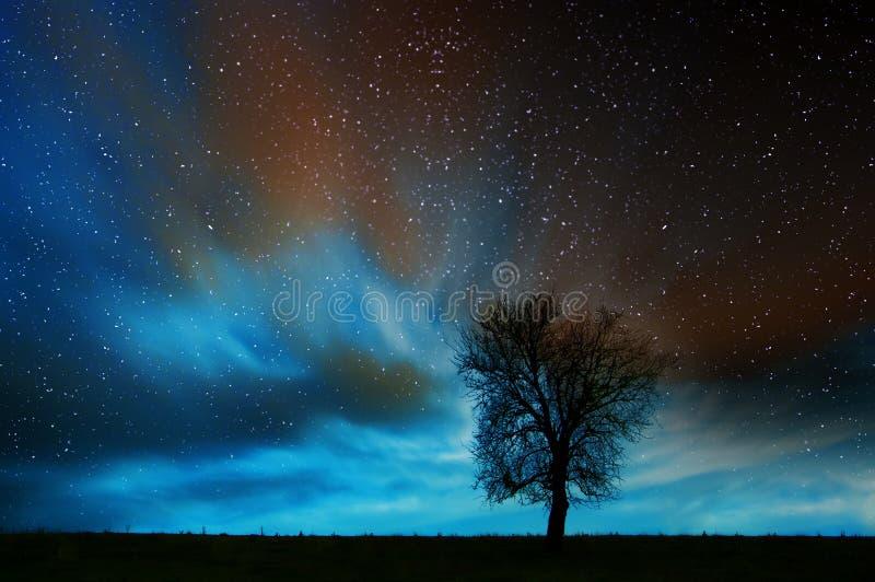 Eenzame boom in sterrige nacht stock afbeelding