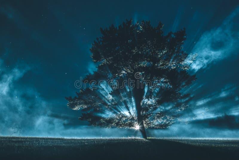 Eenzame boom tegen dramatische hemel royalty-vrije stock afbeeldingen