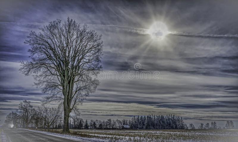 Eenzame boom tegen een zonnestraal in een de winterhemel in recente Daling stock foto's