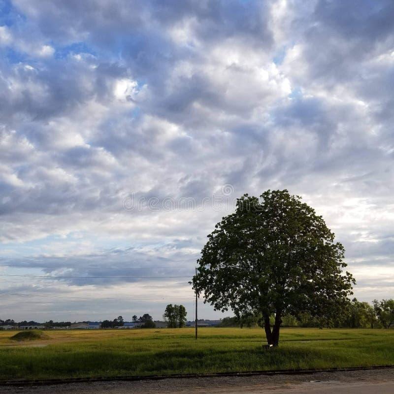 Eenzame Boom in volledige de zomerglorie onder een Blauwe gekleurde hemel stock afbeelding