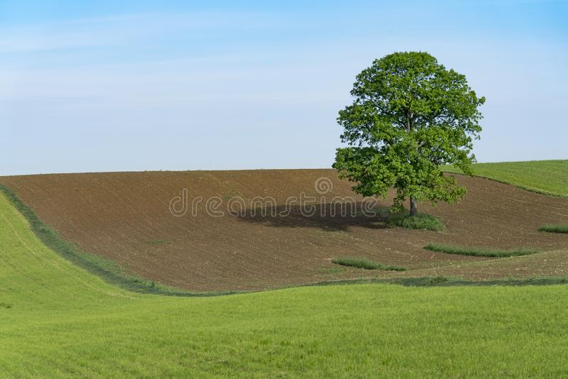 Eenzame boom Vreedzaam tegen Blauwe Hemel royalty-vrije stock fotografie