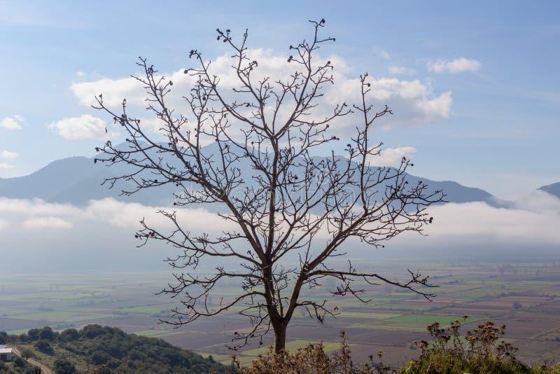 Eenzame boom zonder bladeren tegen de achtergrond van bergen en mist in de herfst, donkere ochtend royalty-vrije stock afbeeldingen