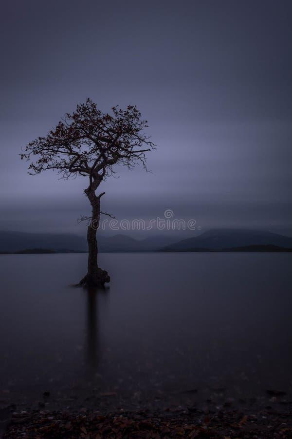 Eenzame boomloch lomond Schotland stock foto's