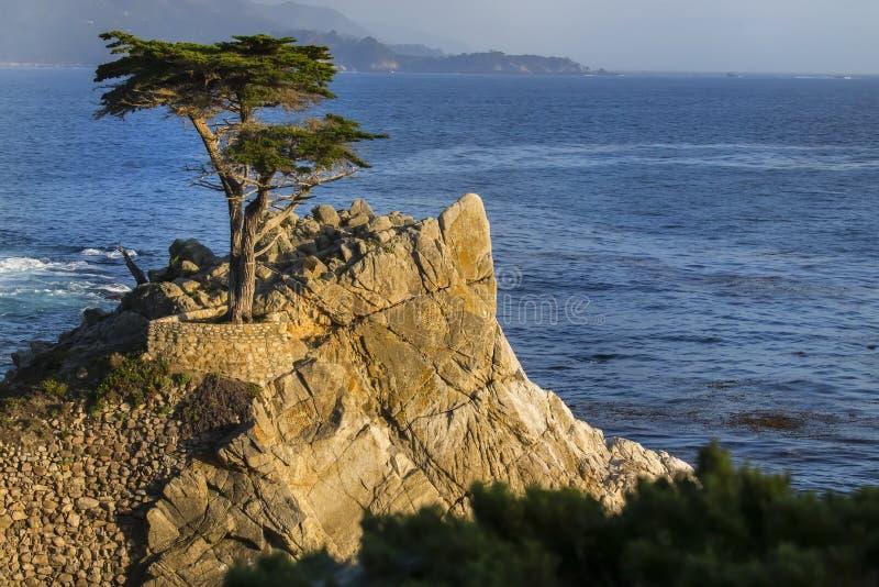 Eenzame Cyrpess-Boom op de Kustlijn van Californië stock afbeeldingen