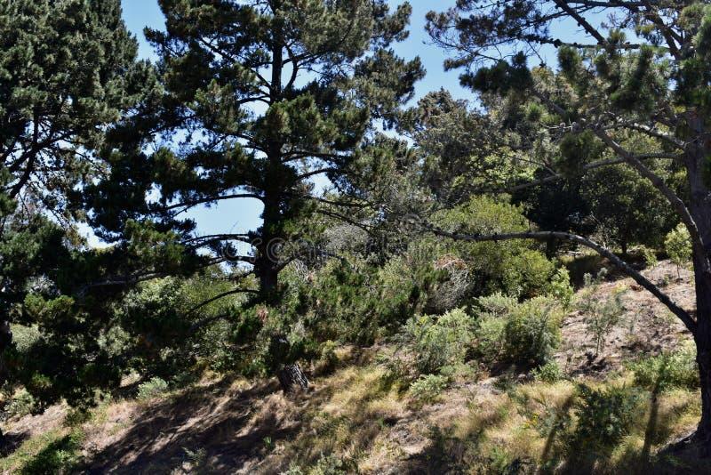 Eenzame Eenzame de Bergcampus van de Berguniversiteit, 9 stock foto