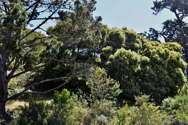 Eenzame Eenzame de Bergcampus van de Berguniversiteit, 8 royalty-vrije stock fotografie