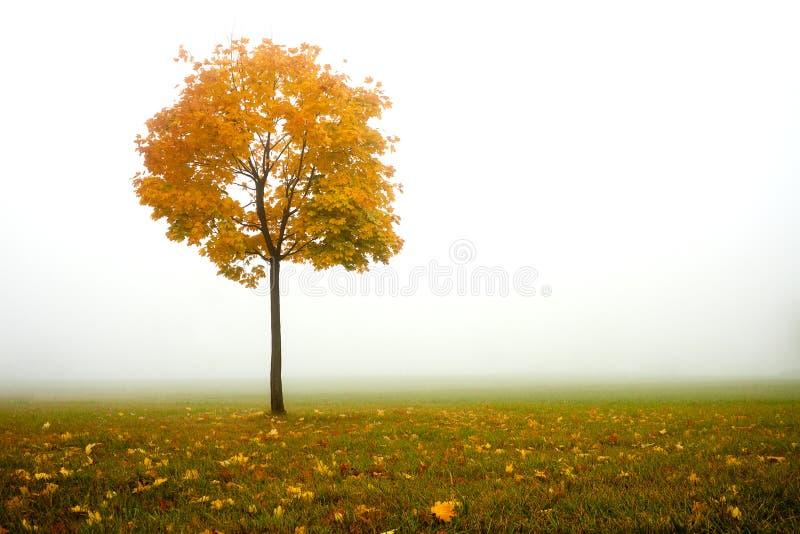 Eenzame de herfstboom stock fotografie