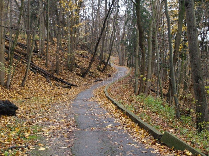 Eenzame de herfstweg, Toronto, Ontario, Canada stock afbeelding