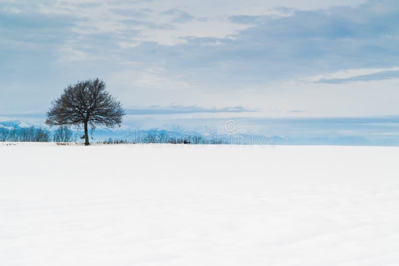 Eenzame de winterboom royalty-vrije stock afbeelding