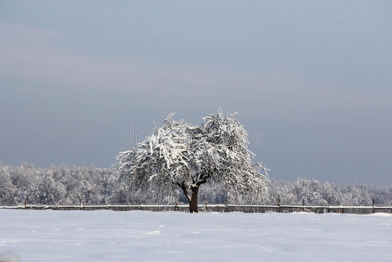 Eenzame de winterboom royalty-vrije stock fotografie
