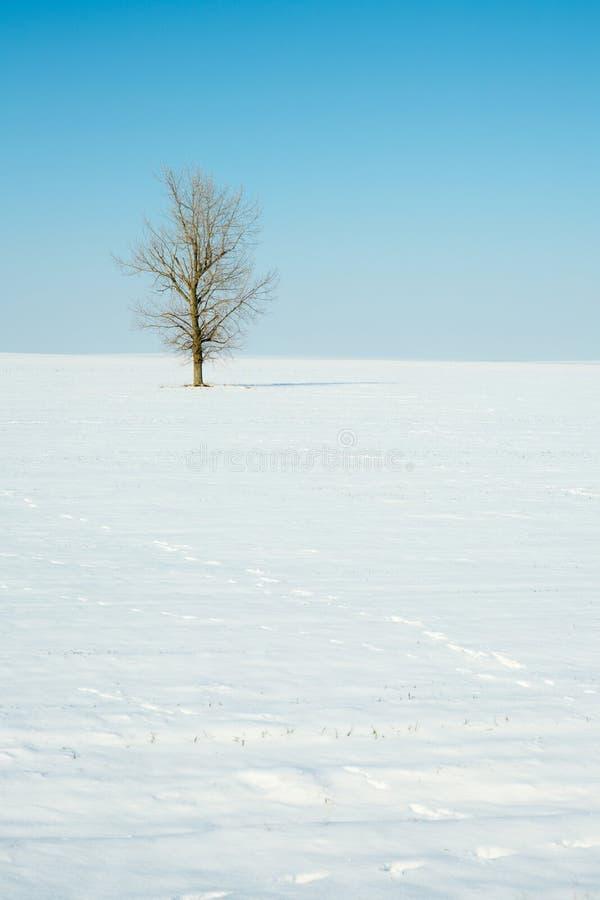 Eenzame de winterboom royalty-vrije stock foto's