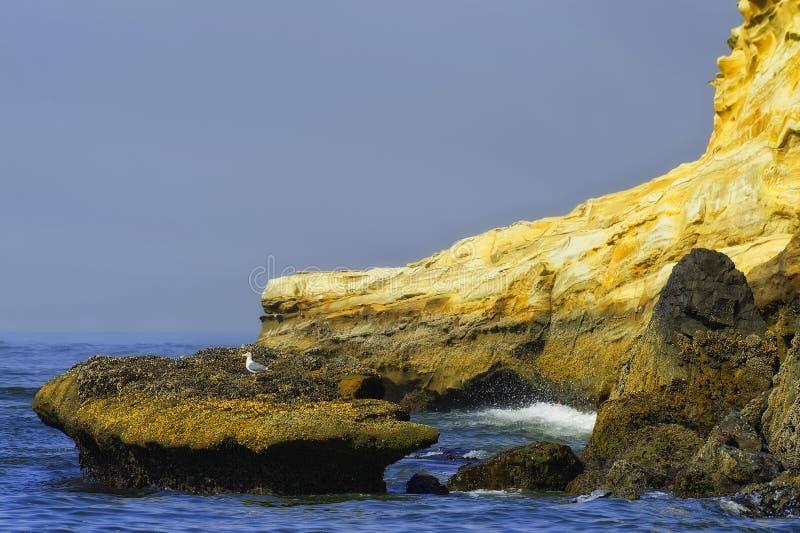 Eenzame die Zeemeeuwtopposities op een rots door zeewater wordt omringd royalty-vrije stock afbeeldingen