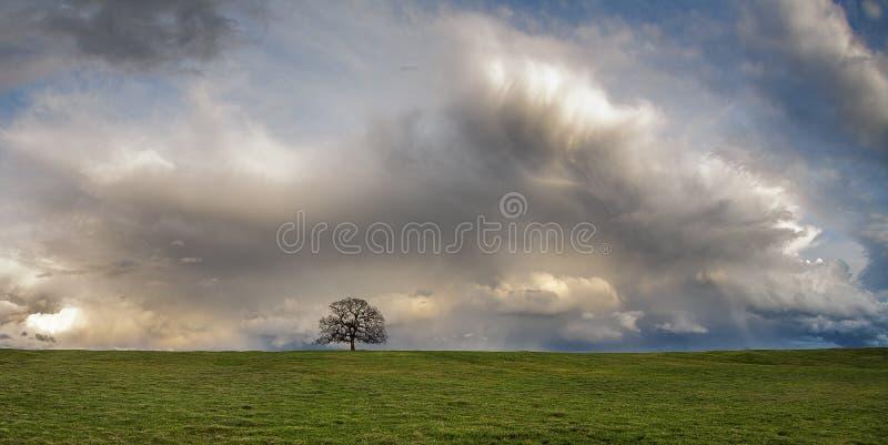Eenzame eiken boom en wolken stock foto