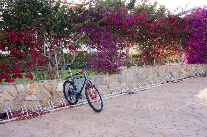 Eenzame fiets royalty-vrije stock foto's