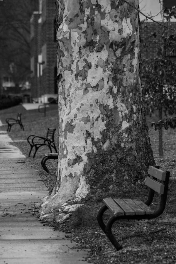 Eenzame Gangen stock fotografie