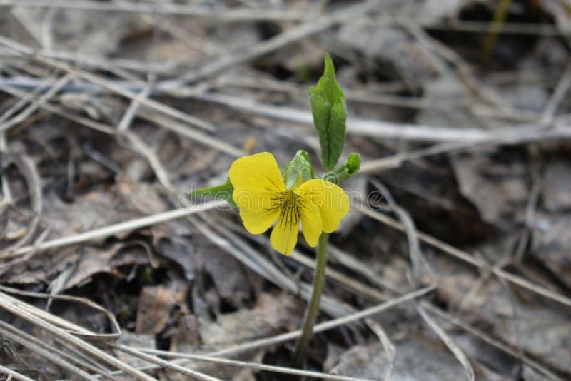 Eenzame gele bloem onder oude donkere bladeren royalty-vrije stock foto's