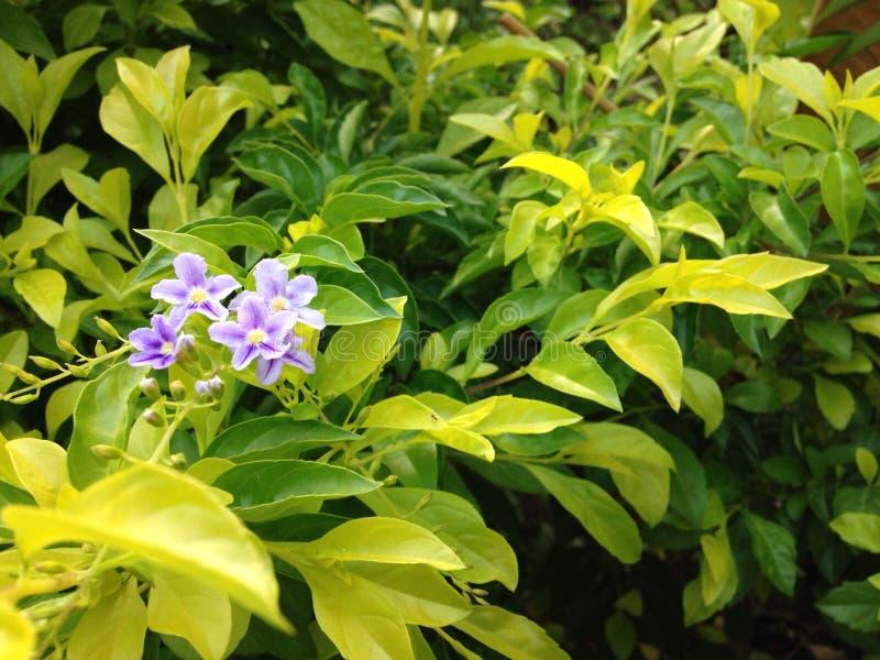 Eenzame groene bloem royalty-vrije stock foto