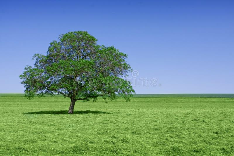 Eenzame groene boom in aard royalty-vrije stock afbeelding