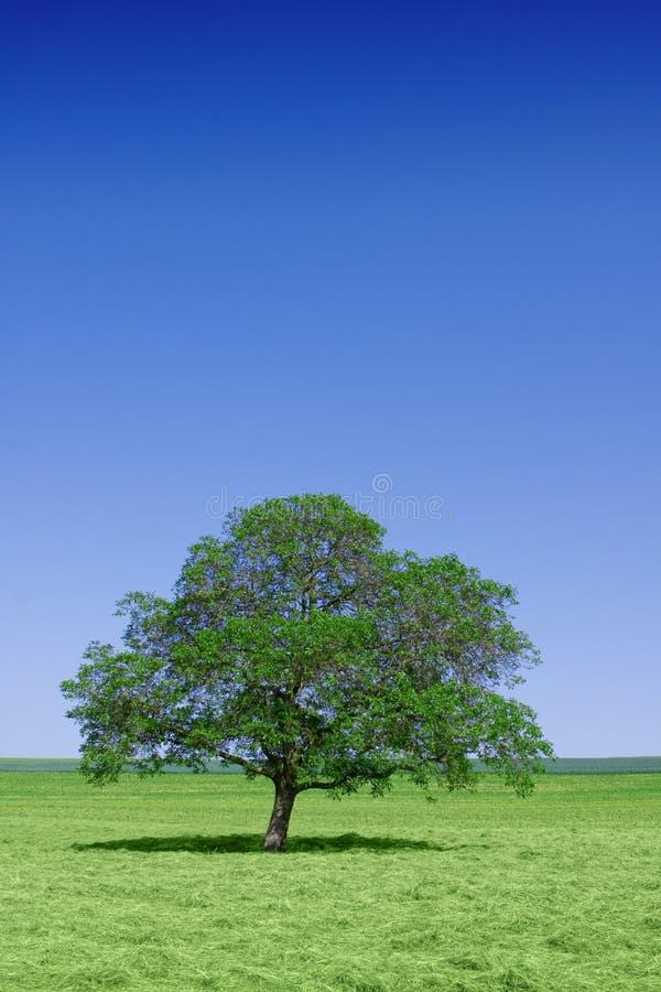 Eenzame groene boom in aard royalty-vrije stock afbeeldingen