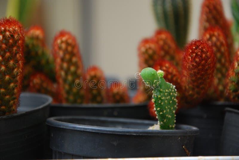 Eenzame groene cactus in tuin royalty-vrije stock afbeeldingen