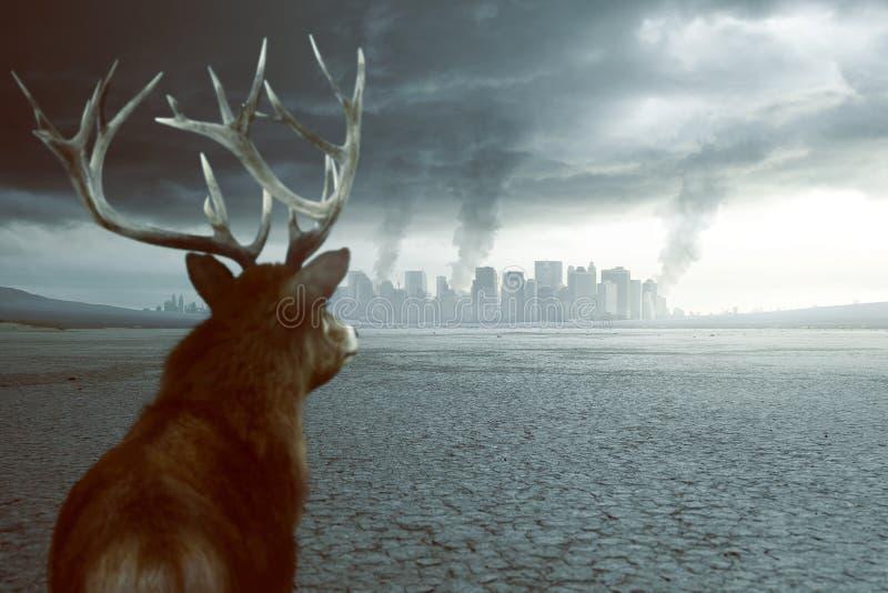 Eenzame herten zien vernietiging royalty-vrije stock foto