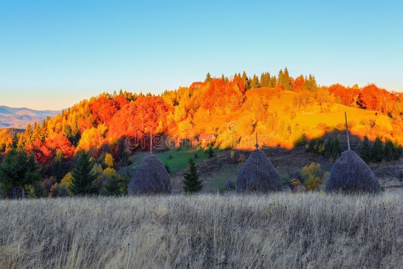 Eenzame huttribunes hoog in de bergweide, waarachter een mening van het multicolored de herfst Karpatische bos opent royalty-vrije stock fotografie
