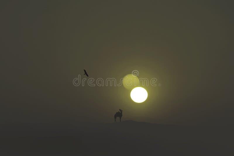 Eenzame kameel in de enorme woestijn royalty-vrije stock foto's