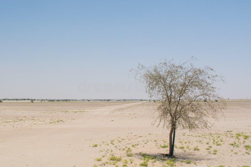 Eenzame kleine het sterven boom bij het midden van de woestijn stock afbeelding
