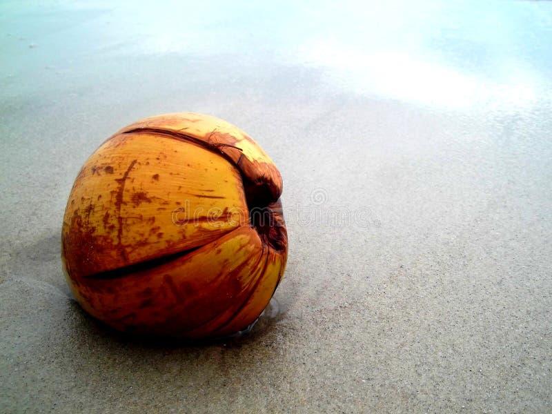 Eenzame kokosnoot royalty-vrije stock fotografie