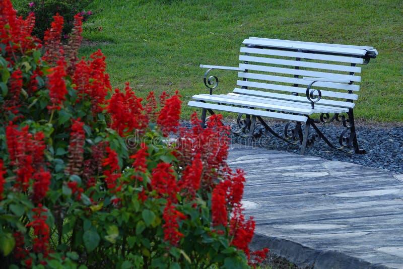 Eenzame lege bank in openbaar park voor rust stock afbeeldingen