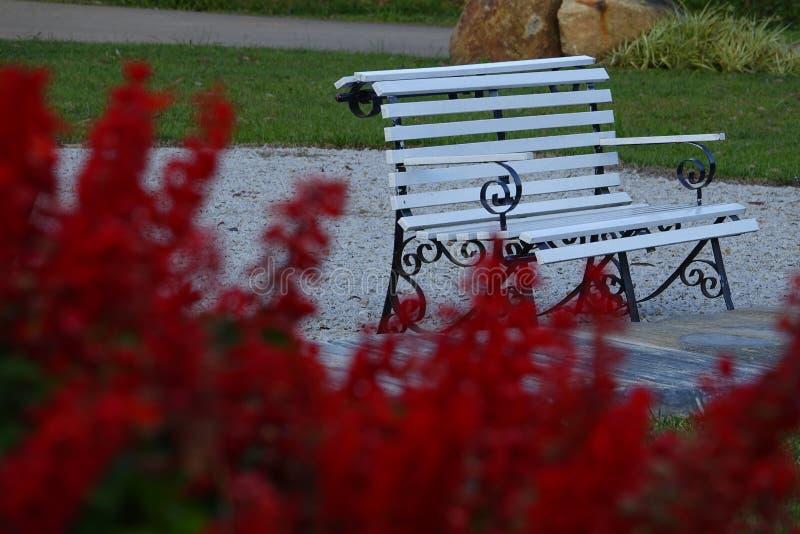 Eenzame lege bank in openbaar park voor rust royalty-vrije stock afbeelding