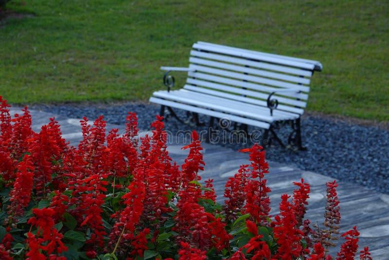 Eenzame lege bank in openbaar park voor rust royalty-vrije stock afbeeldingen